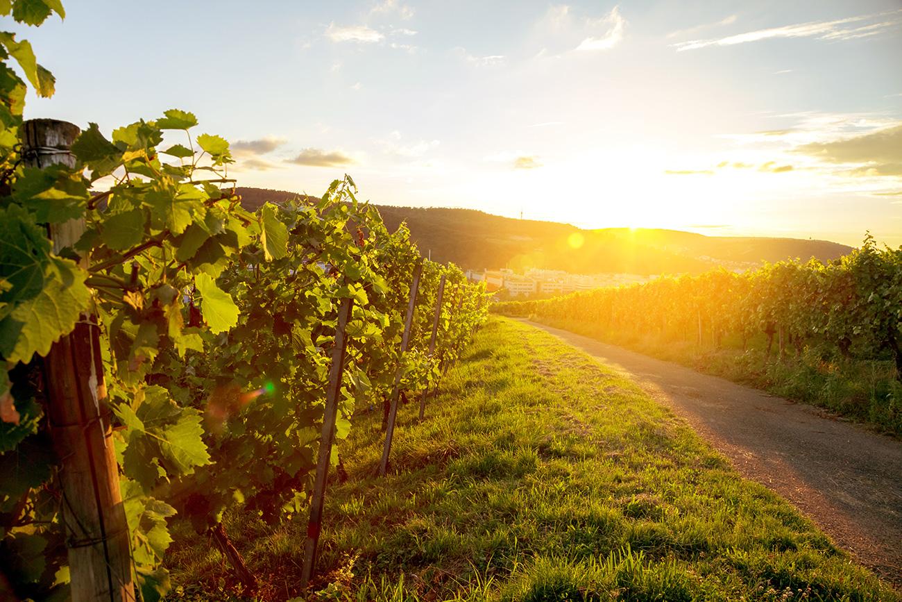 VDP Qualitätswein • Qualitätsbezeichnung Großes Gewächs